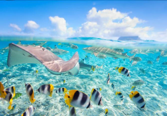 Polinezja Francuska, Turkusowy Raj – incentive