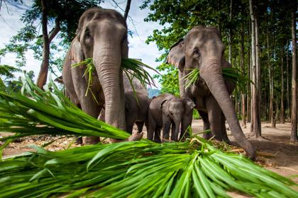 laos wyjazd EcoGlobe Travel